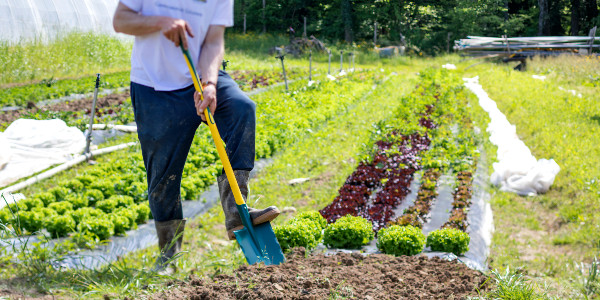 Prepare and maintain your vegetable garden
